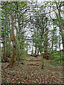 SO8681 : Waymarked woodland path east of Caunsall in Worcestershire by Roger  Kidd