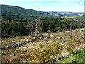 SO0516 : Cleared land east of Pont y Llwyn by Christine Johnstone