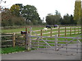 TL7300 : Paddock with Horses, near Blind Lane, West Hanningfield by Roger Jones