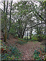 SO8681 : Woodland in the Fairy Glen near Caunsall, Worcestershire by Roger  Kidd