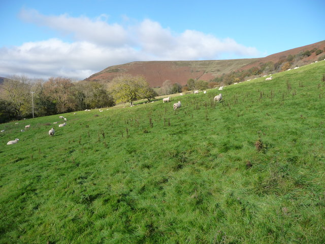 Sheep pasture south-east of Wiral Wood
