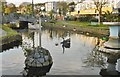 SX9676 : Dawlish, black swans by Mike Faherty