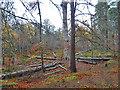 NJ0327 : Anagach Woods by Anne Burgess
