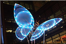 TQ1985 : View of a butterfly in the lantern parade of Light Up The Night #2 by Robert Lamb