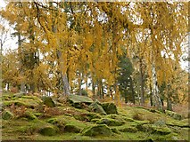 SK2579 : Mossy rocks and Autumn leaves by Graham Hogg