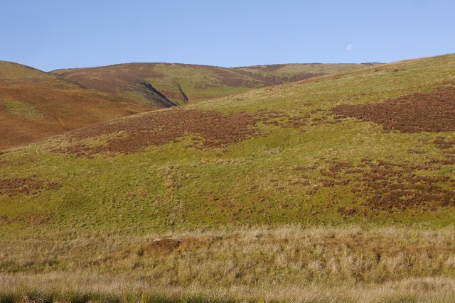 Whitehope Law