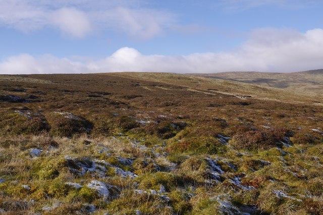 Bog on Greenside Law