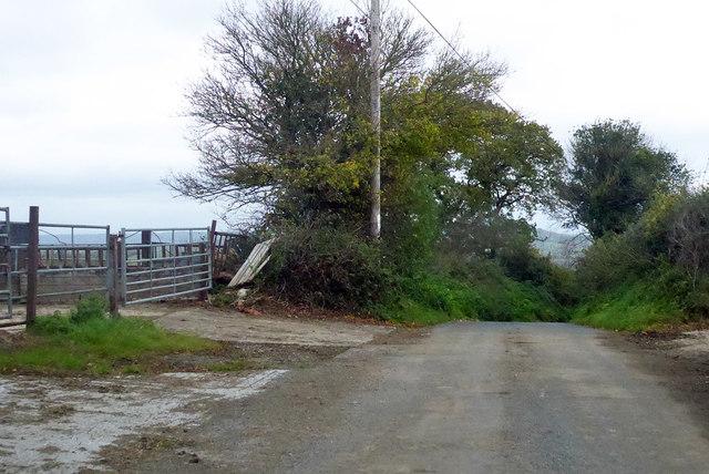 Lane by Newhouse Farm