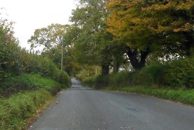 Road from Halstock towards Yeovil