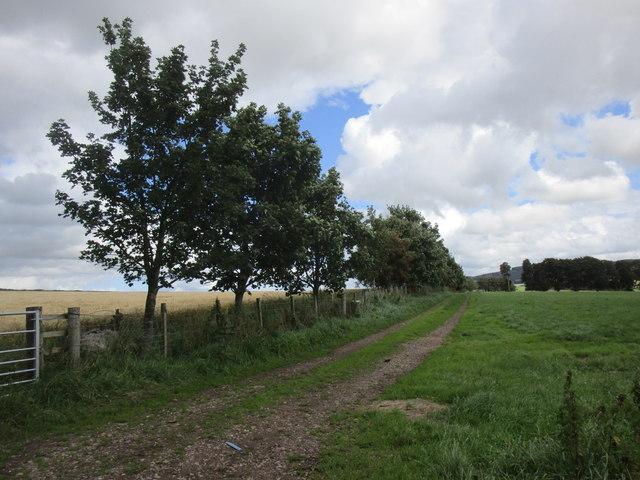 Farm track at Covington