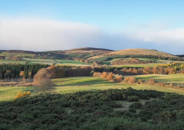 Sunlit fields beyond gorse