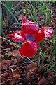TQ6080 : Poppy by Glyn Baker
