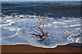 NU0151 : Driftwood at Spittal Beach by Walter Baxter
