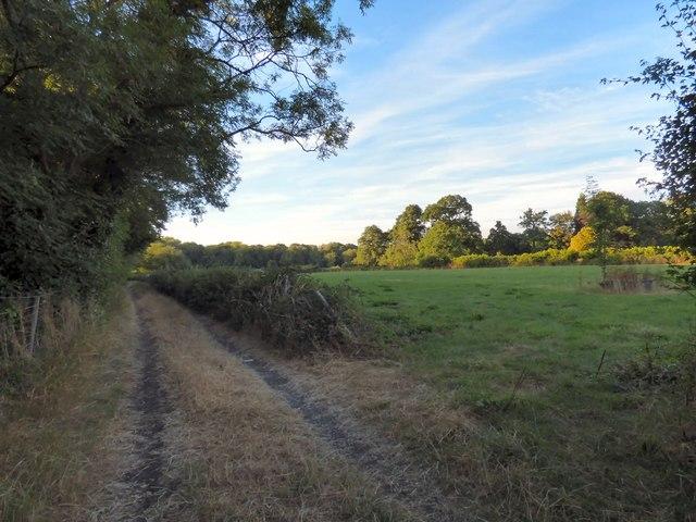 Fields near Russ Hill by Gerald England