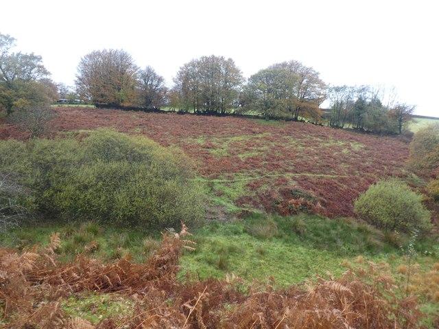 Bracken and scrub in field near Halse