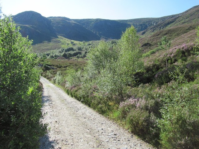 Road in Glen Affric