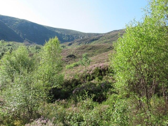 Woodland restoration in Glen Affric