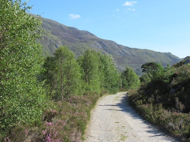 Road on the south side of Loch Affric
