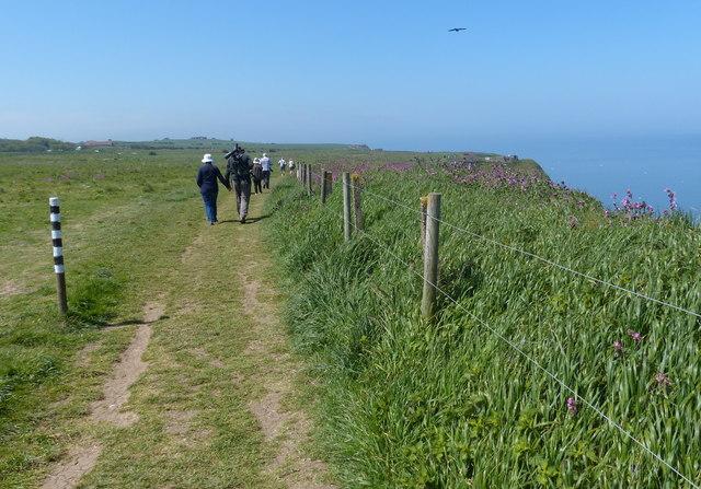Headland Way at the Bempton Cliffs Nature Reserve
