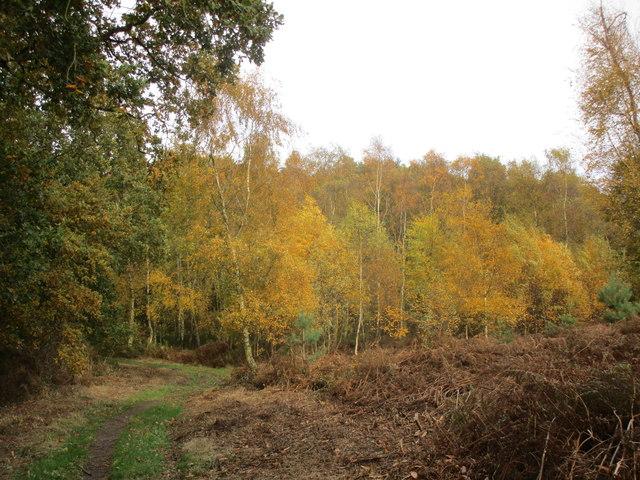 Path approaching Beech Hill Wood