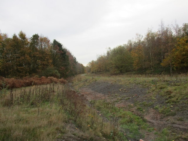 Woodland and drain