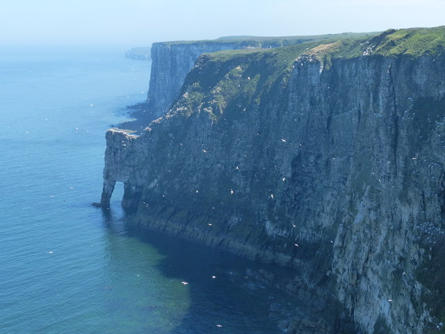 Scale Nab at the Bempton Cliffs