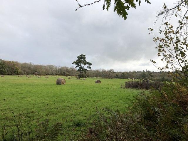 Near to Cuckfield Park