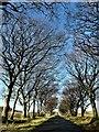 NS2450 : Dalry Moor Road : Week 45