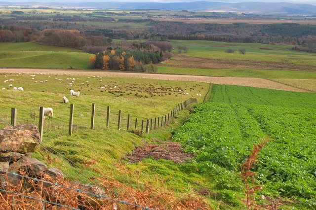 Crops and sheep, Pentland Hills
