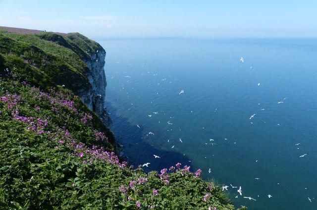 Bempton Cliffs Nature Reserve