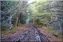 NJ1823 : Muddy Forest Track by Anne Burgess