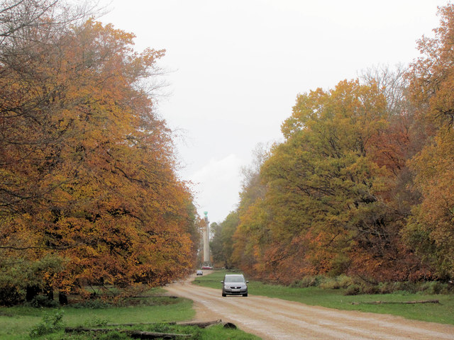 Autumn colours along the avenue at Ashridge