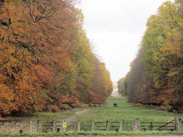 Autumn colours along the tree-lined avenue  towards Ashridge House