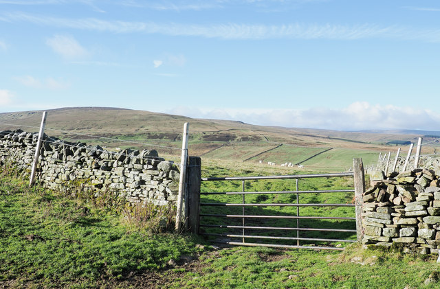 Rough grazing with sheep, beyond gate
