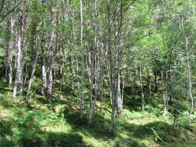 Woodland above Loch Beinn a' Mheadhoin
