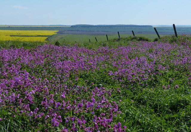 View inland across Speeton Moor