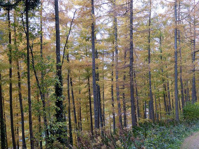 Autumn in Coed Dol-fawr