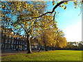 TQ3185 : Autumn colour on Highbury Fields by Malc McDonald