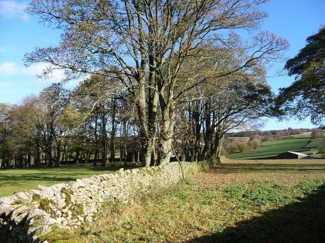 Thornber Plantation, at Hoyman Laithe
