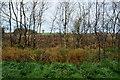 H4967 : Heathland, Donaghanie by Kenneth  Allen