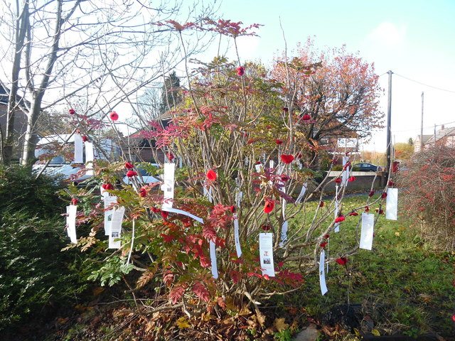 Tree with Remembrance labels, Prestwood (1)