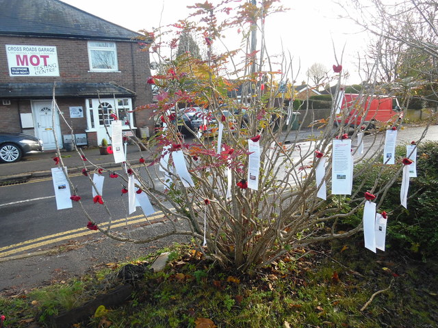 Tree with Remembrance labels, Prestwood (2)