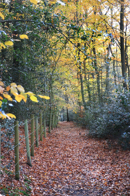 Shakespeare's Way in Woollmans Wood