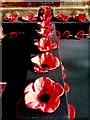 SP2864 : Ceramic poppies by Alan Hughes
