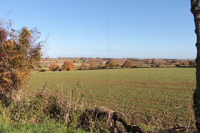 Field at Kelly's Farm, Shepton Beauchamp