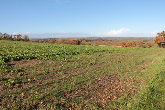 Field between Shell's Farm and Kelly's Farm, Shepton Beauchamp