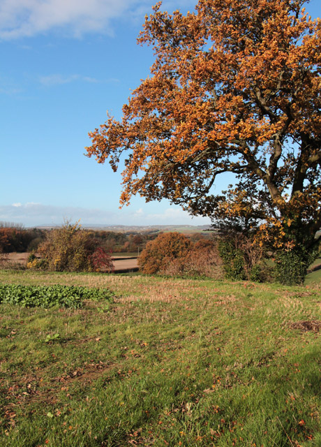 Farmland near Shepton Beauchamp