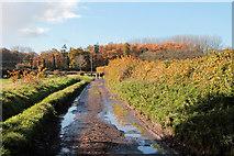 ST4018 : Marsh Lane, near Shepton Beauchamp by Kate Jewell