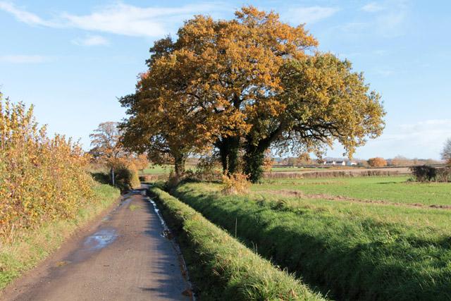 Marsh Lane, near Shepton Beauchamp