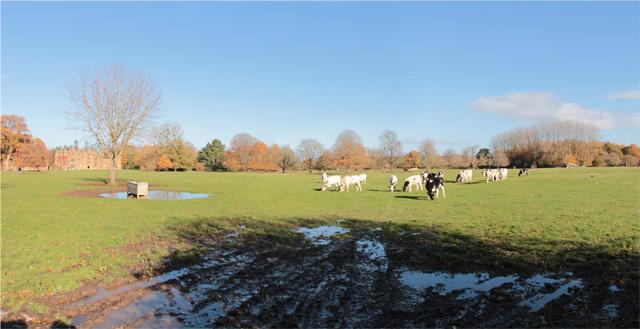 Large pasture on the Barrington Court estate